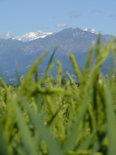 monte-rosa-9ago08_2.JPG